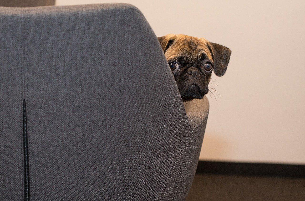 Coworking que admite mascotas